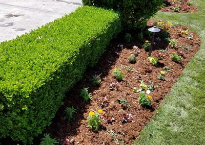 tree and shrub trimming okc